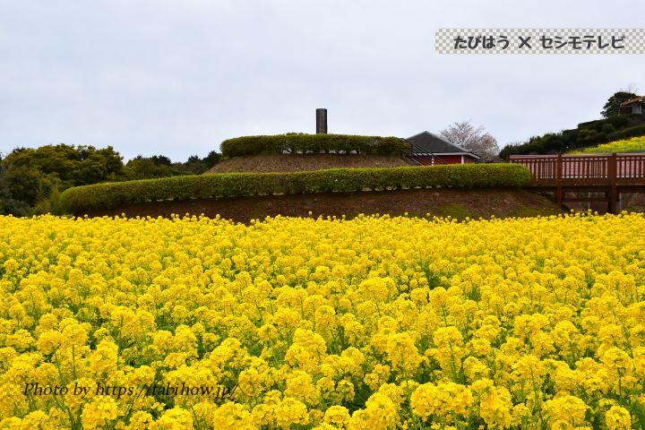 寺山いこいの広場の菜の花