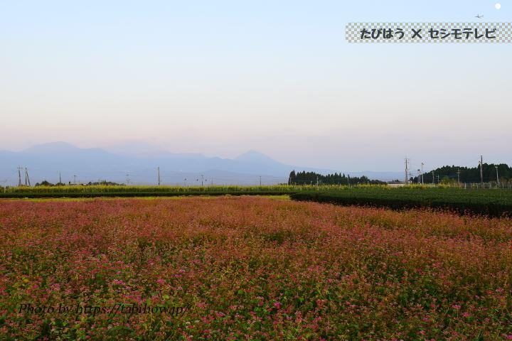 陵北ふれあい農園のソバの花