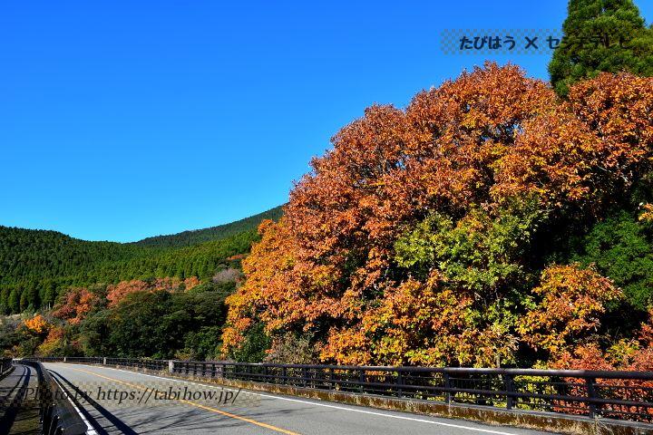 霧島一帯の紅葉