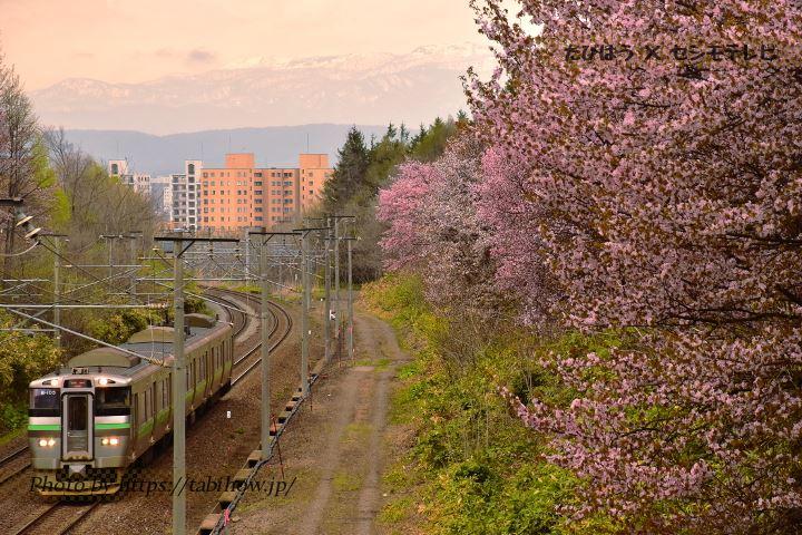 北海道・道央の花特集