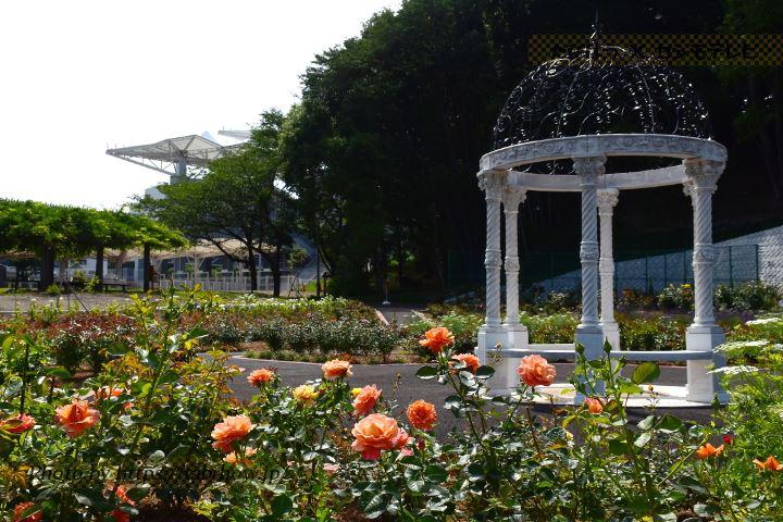 神代植物公園の春バラ