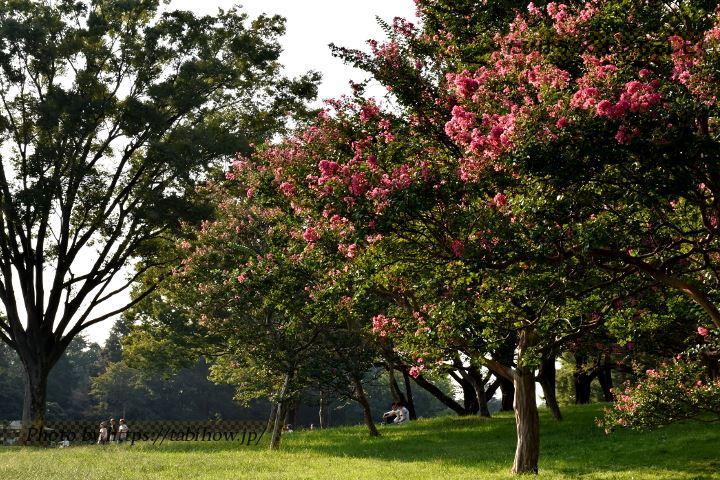 国営昭和記念公園のサルスベリ