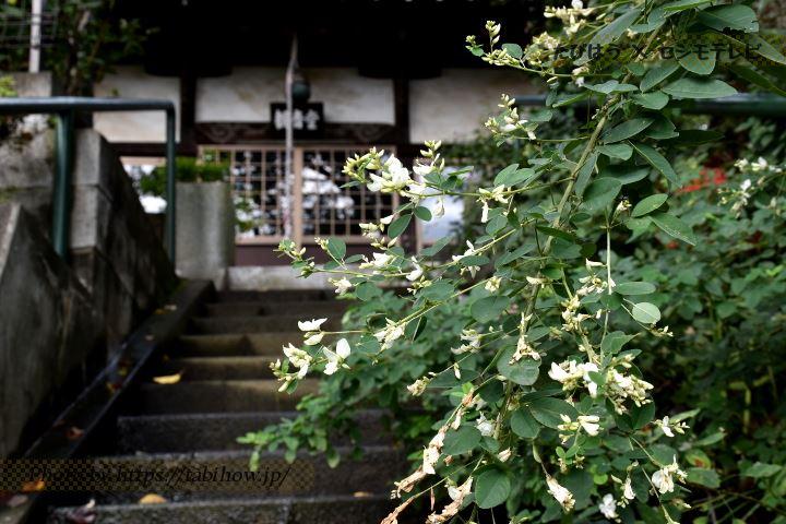萩霊園のハギ