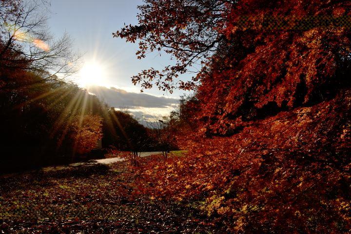 桜ヶ丘公園の紅葉
