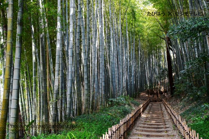 千葉県の絶景スポット