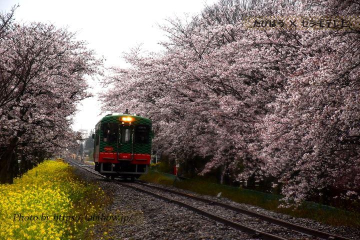 北真岡駅-西田井駅