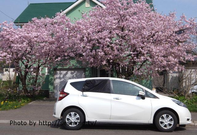 松前へ向かう途中の桜