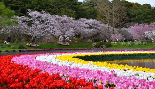 チューリップの名所2選!3~5月に咲く華やかさが魅力