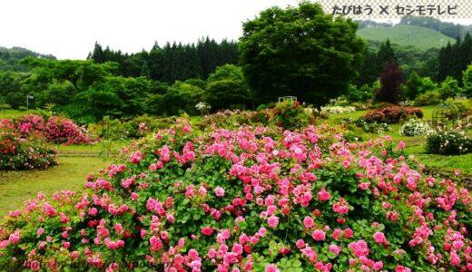 青森県の花畑31品種50名所!春夏秋冬の見頃