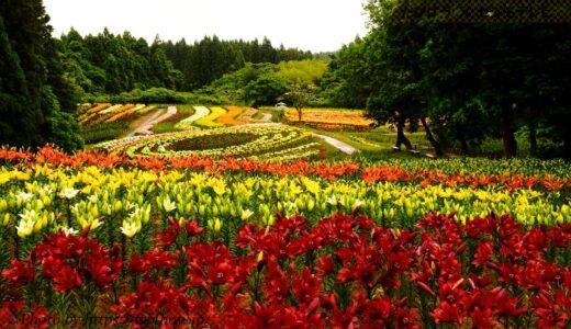 宮城県の花畑38品種90名所!春夏秋冬の見頃