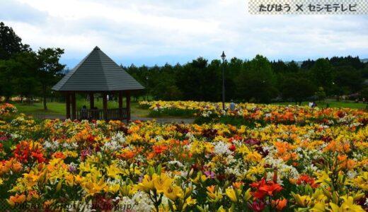 山形県の花畑37品種86名所!春夏秋冬の見頃