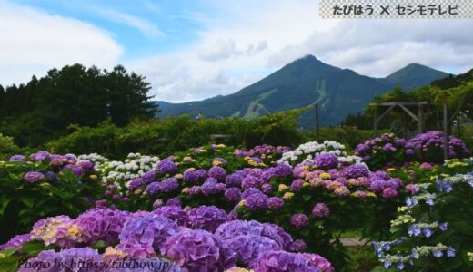 福島県の花畑33品種80名所!春夏秋冬の見頃