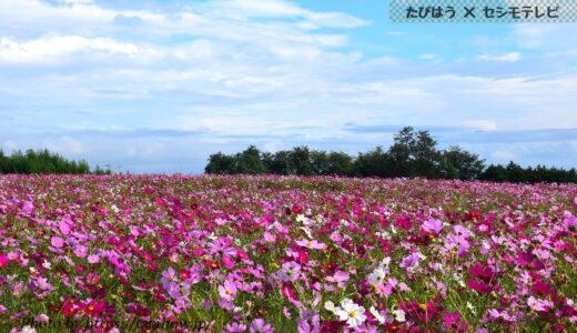 群馬県の花畑42品種92名所!春夏秋冬の見頃