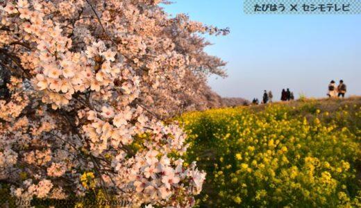 埼玉県の花畑44品種118名所!春夏秋冬の見頃
