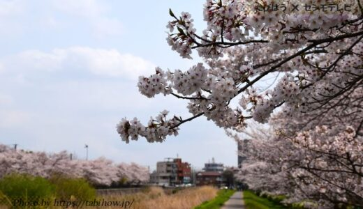 千葉県の花畑37品種108名所!春夏秋冬の見頃