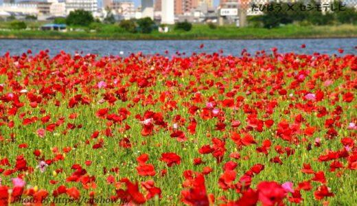 東京都23区の花畑23品種58名所!春夏秋冬の見頃