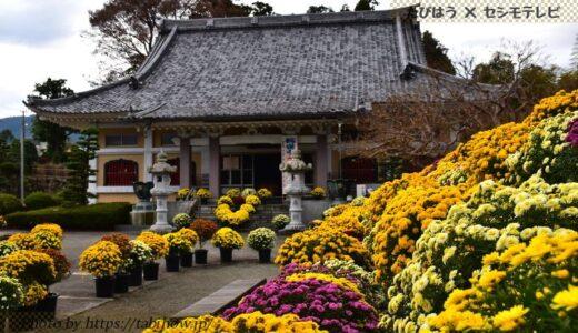 神奈川県の花畑42品種105名所!春夏秋冬の見頃