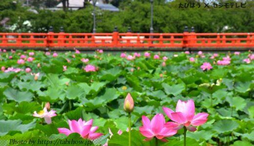 新潟県の花畑35品種120名所!春夏秋冬の見頃