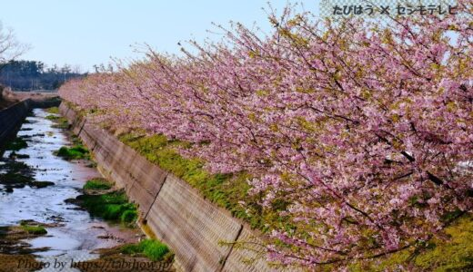 石川県の花畑32品種74名所!春夏秋冬の見頃