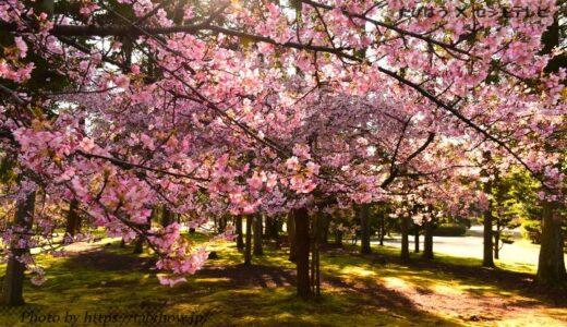 福井県の花畑27品種51名所!春夏秋冬の見頃