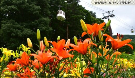 長野県の花畑37品種101名所!春夏秋冬の見頃
