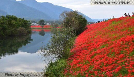 岐阜県の花畑30品種89名所!春夏秋冬の見頃