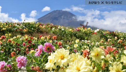 静岡県の花畑34品種105名所!春夏秋冬の見頃