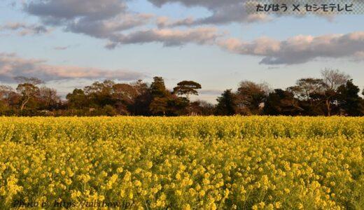 愛知県の花畑31品種81名所!春夏秋冬の見頃
