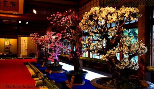 滋賀県の花畑29品種85名所!春夏秋冬の見頃