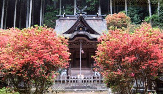 兵庫県の花畑32品種137名所!春夏秋冬の見頃