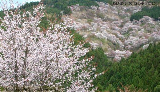 奈良県の花畑32品種79名所!春夏秋冬の見頃