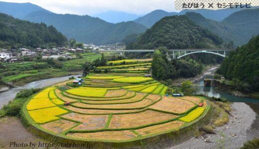 和歌山県の花畑32品種86名所!春夏秋冬の見頃