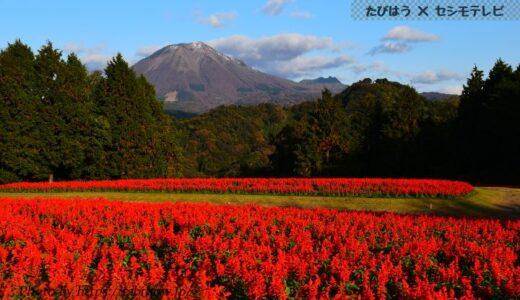 鳥取県の花畑26品種62名所!春夏秋冬の見頃