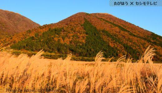 島根県の花畑31品種66名所!春夏秋冬の見頃