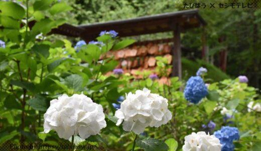 岡山県の花畑32品種76名所!春夏秋冬の見頃
