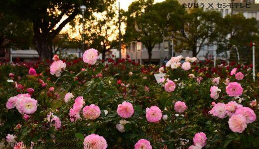 広島県の花畑39品種108名所!春夏秋冬の見頃