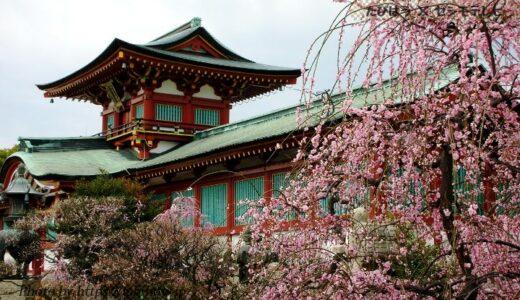 山口県の花畑32品種75名所!春夏秋冬の見頃