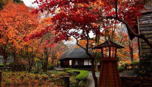 徳島県の花畑26品種58名所!春夏秋冬の見頃