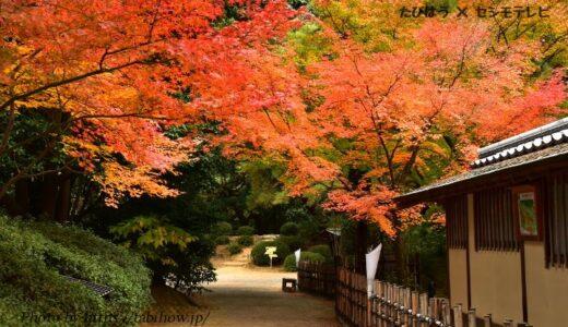 香川県の花畑30品種70名所!春夏秋冬の見頃