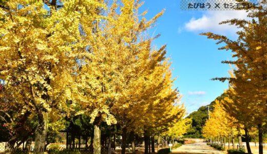 愛媛県の観光情報!グルメ、観光地、交通、宿で旅行計画