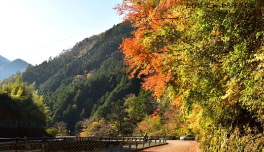高知県の花畑28品種57名所!春夏秋冬の見頃