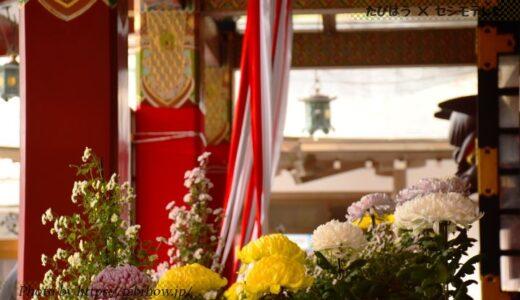 佐賀県の花畑31品種60名所!春夏秋冬の見頃