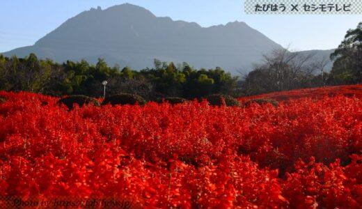 長崎県の花畑36品種87名所!春夏秋冬の見頃