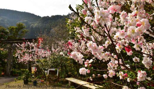 熊本県の花畑35品種78名所!春夏秋冬の見頃