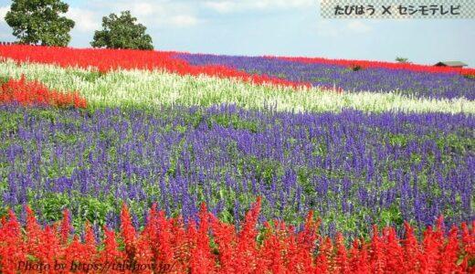 大分県の花畑33品種71名所!春夏秋冬の見頃