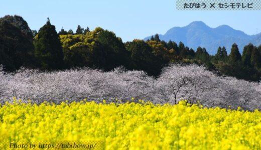 宮崎県の花畑31品種72名所!春夏秋冬の見頃