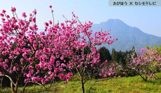 鹿児島県の花畑36品種73名所!春夏秋冬の見頃