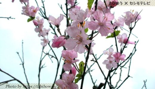 沖縄県の花畑14品種23名所!春夏秋冬の見頃