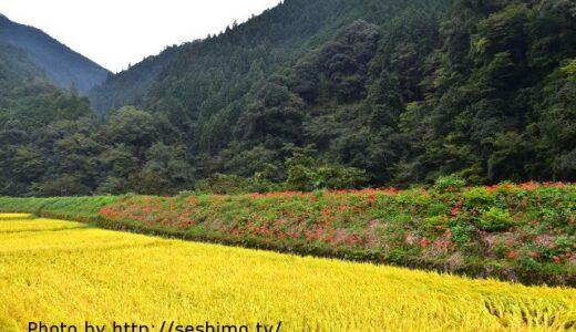 地方移住で就農は危険?TPPと減反廃止による農業への影響
