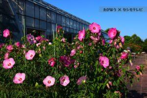 三重県の花畑32品種84名所!春夏秋冬の見頃
